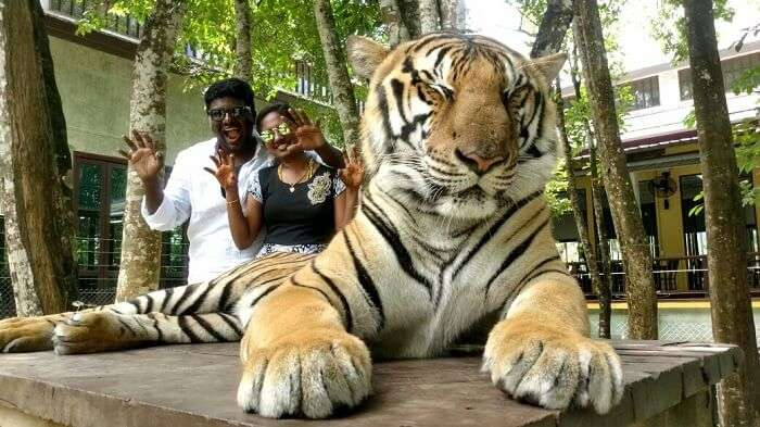 Tiger Kingdom in Phuket