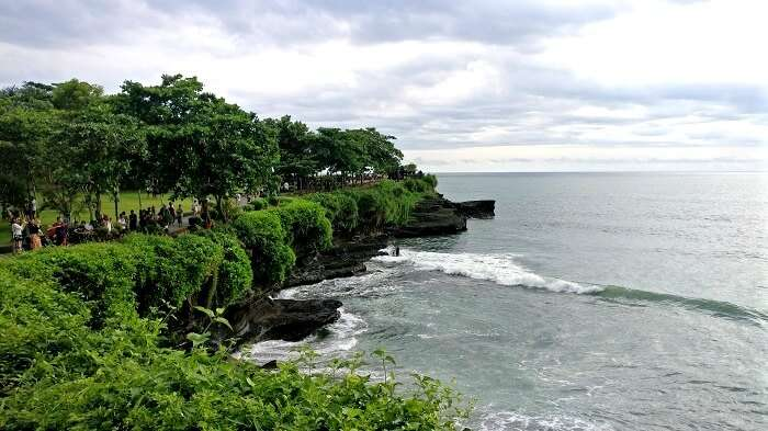 lush green forests on the shoreline of a beach