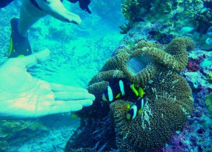 kishor & wife spot clown fish during scuba diving