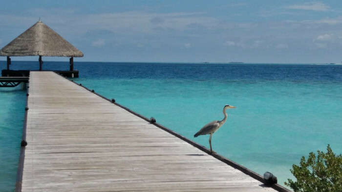 kishor & wife touring the maldives island and spotting water birds