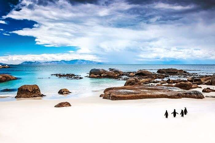 Penguins on the beautiful Boulders Beach