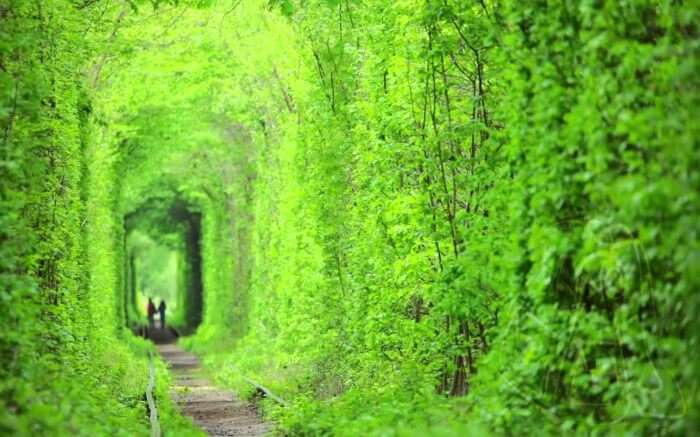 Shot of the Tunnel of Love in Ukraine