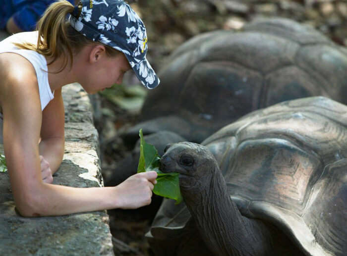 feed tortoises in seychelles