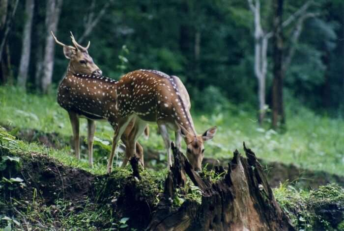 indulge with the wild of Bhagwan Mahavir Wildlife Sanctuary