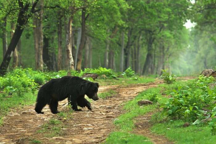 spot sloth bears at Cotigao Wildlife Sanctuary