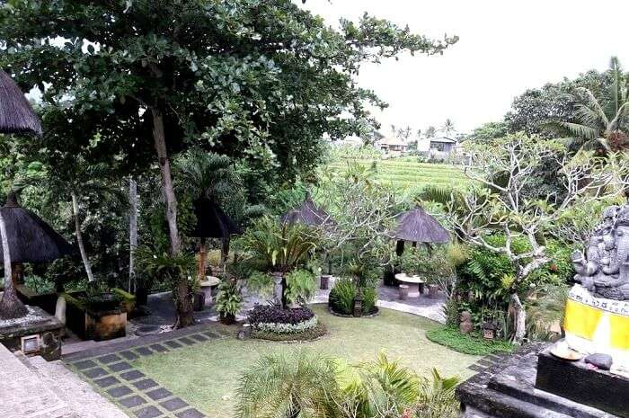 green landscape in Bali