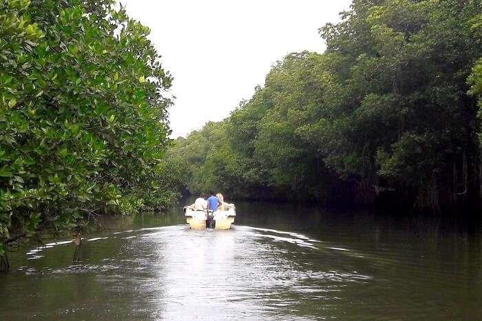 ride through the mangrove forest