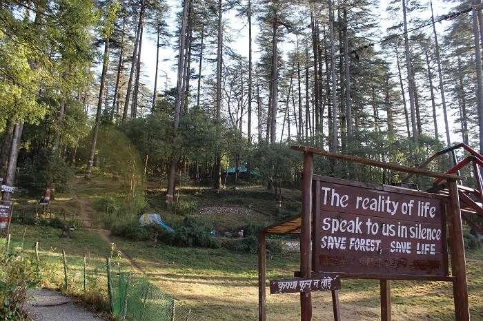 Dhanaulti greenery