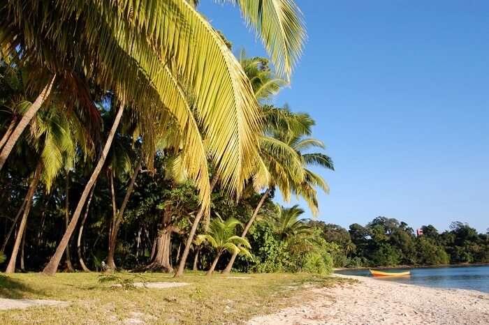 The plush vegetation at the Avis Island Beach in Andaman
