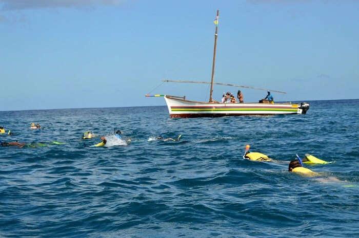 Dolphin cruise in Mauritius