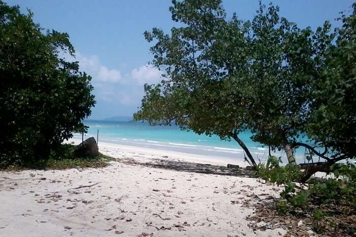 The calm waters and tropical vegetation on the Kalapather Beach of Havelock Island