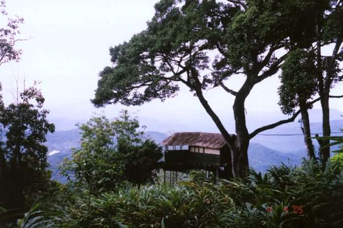 One of the treehouses of Munnar Inn overlooking the valley