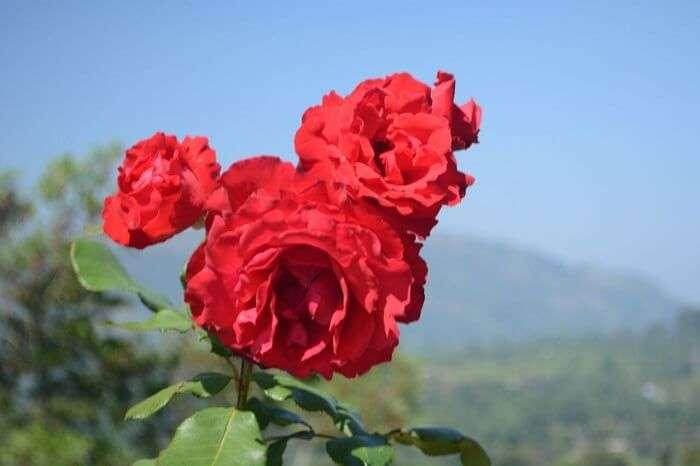 flora in Nuwara Eliya