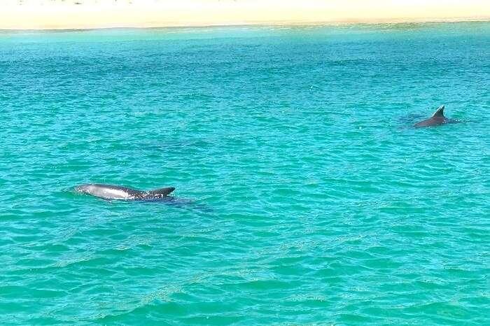 snorkeling at moreton island