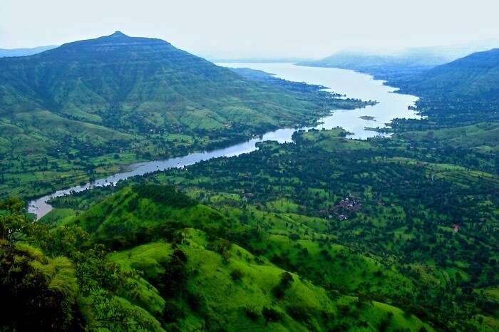lush green forests of mahabaleshwar in maharashtra