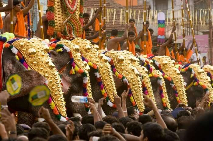 decorated elephants in Kollam