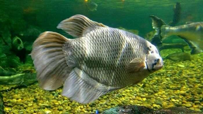 Exotic fishes at the ocean world in Bangkok