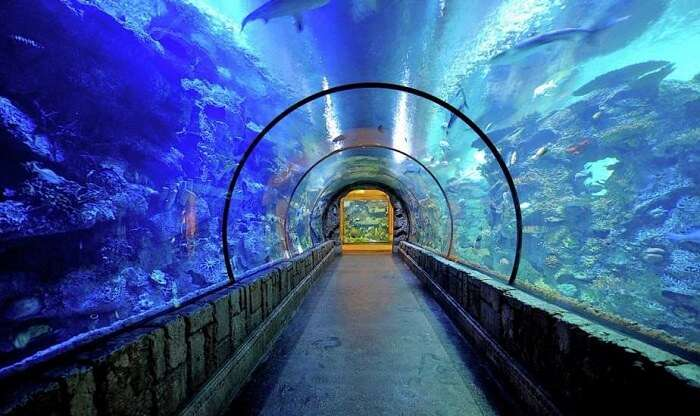 Shark Reef Aquarium Vegas