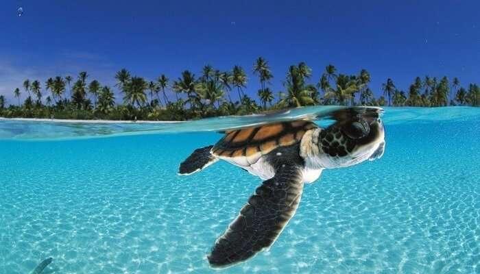 Lakshadweep Islands