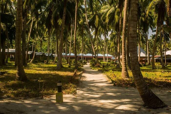 Nature in havelock island