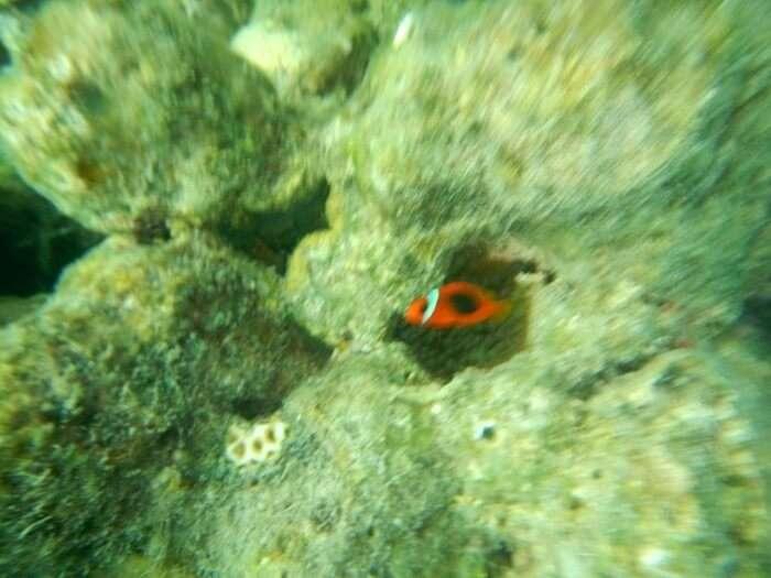 marine life andaman