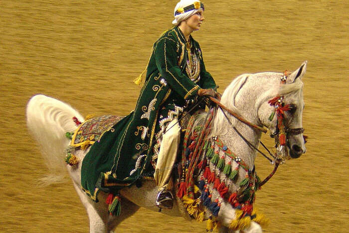 Arabian Horse Riding View
