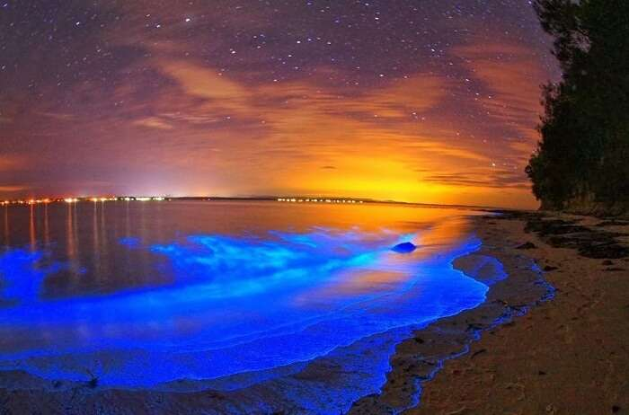 Bioluminiscent beach maldives
