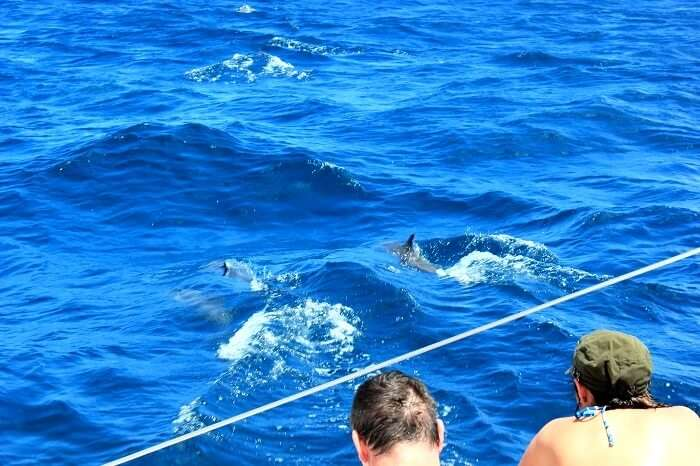 Dolphin spotting at the Catamaran cruise