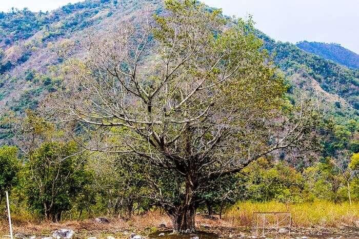 Travelling in Rishikesh