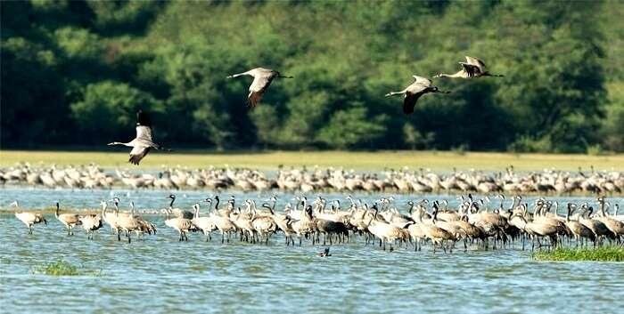 Thol Bird Sanctuary, Ahmedabad