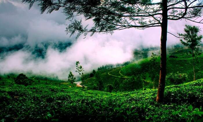 Enjoy the dream view in monsoon