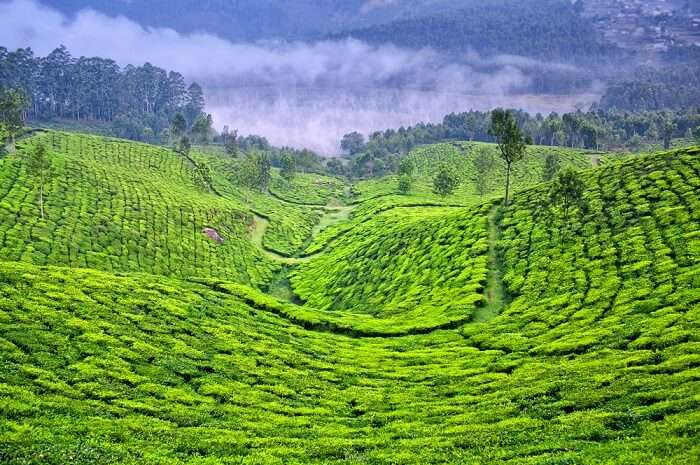 beautiful hill station near Munnar