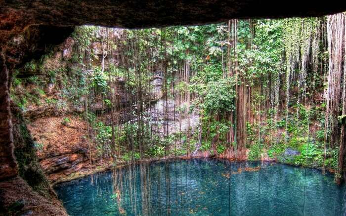 Vines hanging above Cenotes in Mexico