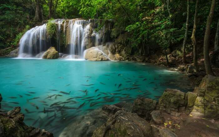 Fishes in a pool formed by Erawan Falls in Thailand