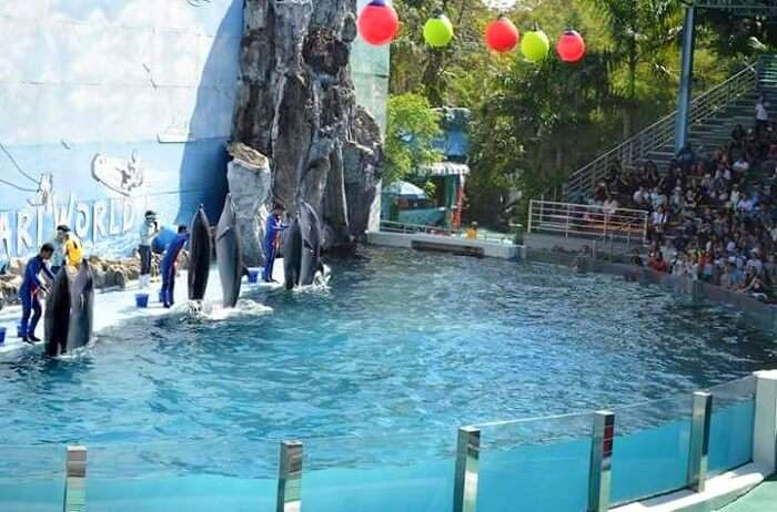 Dolphins show in Bangkok
