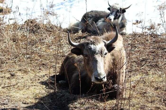 photography in rural bhutan
