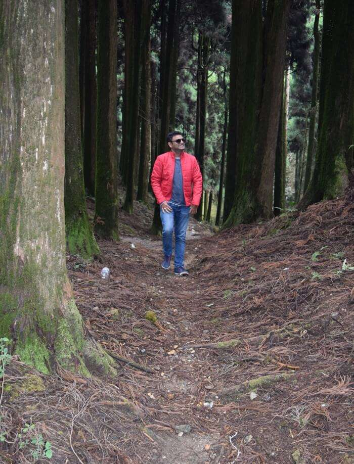 Woods of Darjeeling