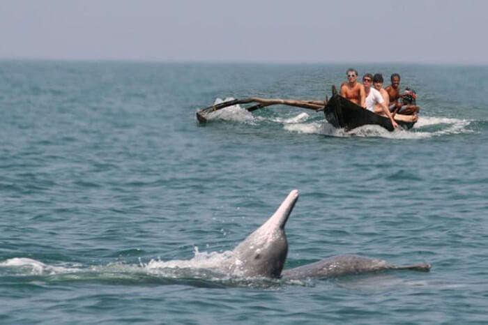 Travelers spot a dolphin enjoying near the Butterfly beach in Goa