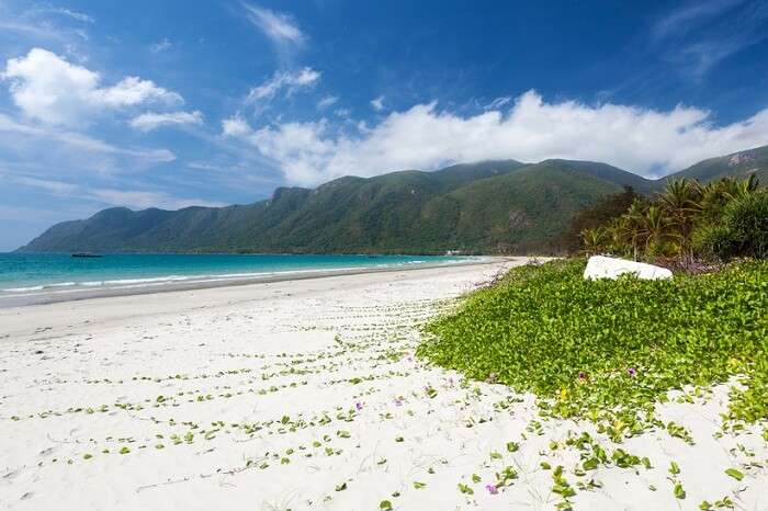 Exotic beach with white sand and green flora on Con Dao Island in Vietnam