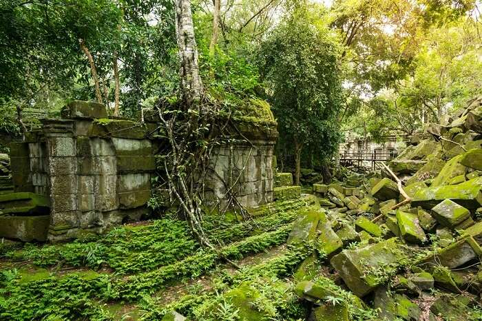 Beng Mealea temple ruins in the middle of jungle in Cambodia
