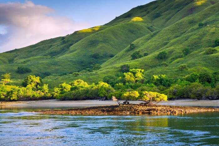 Coastal landscape of Komodo National Park island