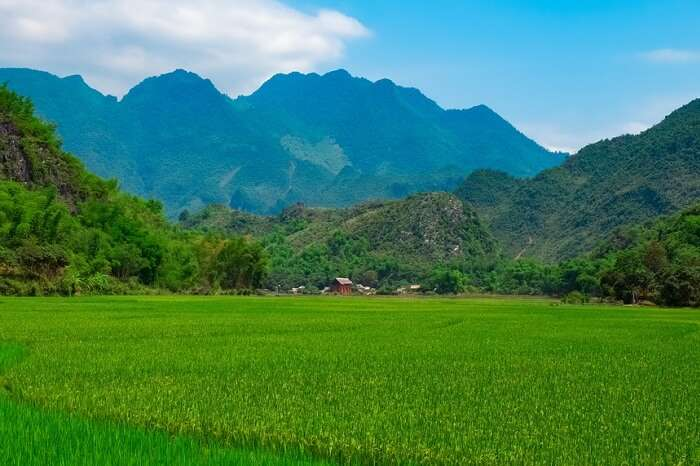 Green rice field and mountains in Mai Chau Valley of Vietnam