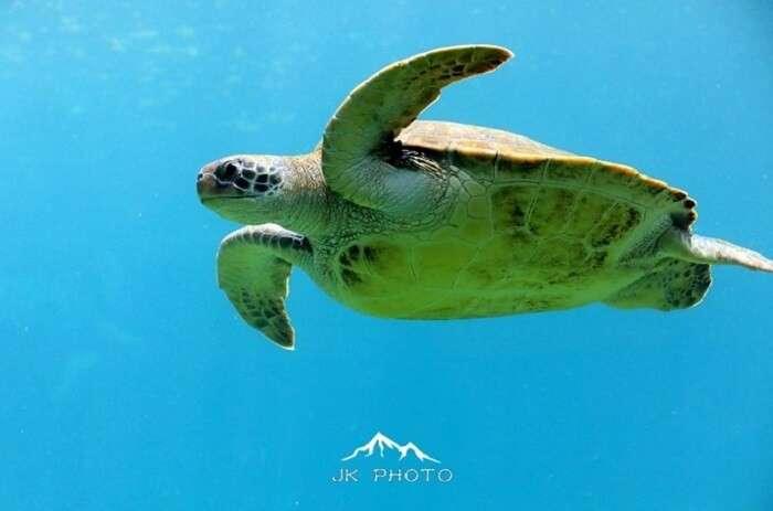 Kelonia Turtle Sanctuary in Reunion Island, France