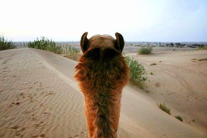 punita taking a camel ride