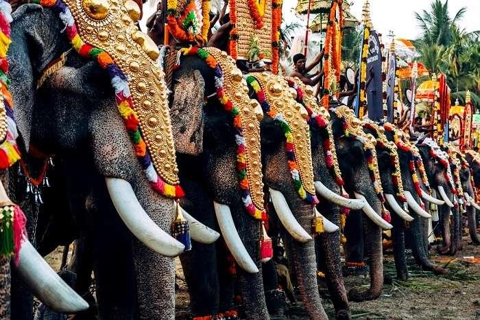 Thrissur Elephant Festival