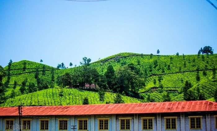 Munnar Tea Factory