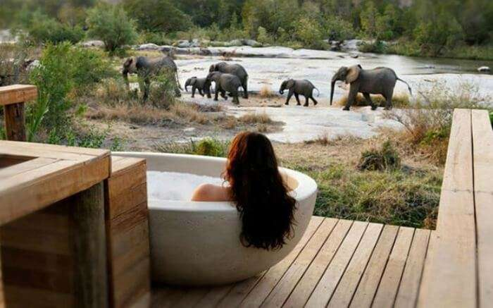 A woman in a bathtub looking at the elephants in the open