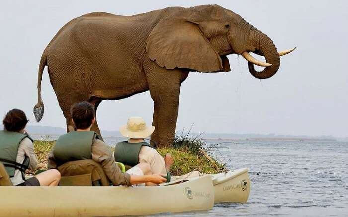 Couple watching elephant while enjoying a boat safari in Zambia