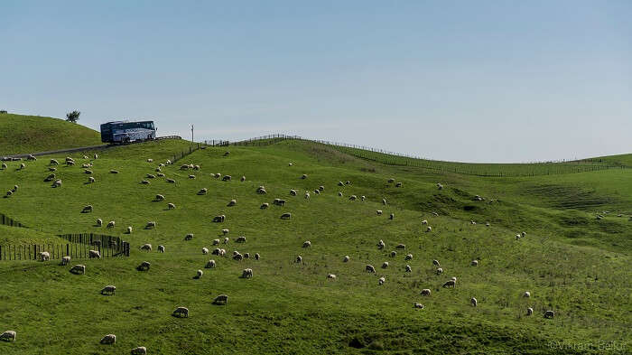 Way from Waiheke to Rotorua