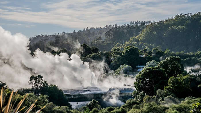 Natural beauty of Rotorua